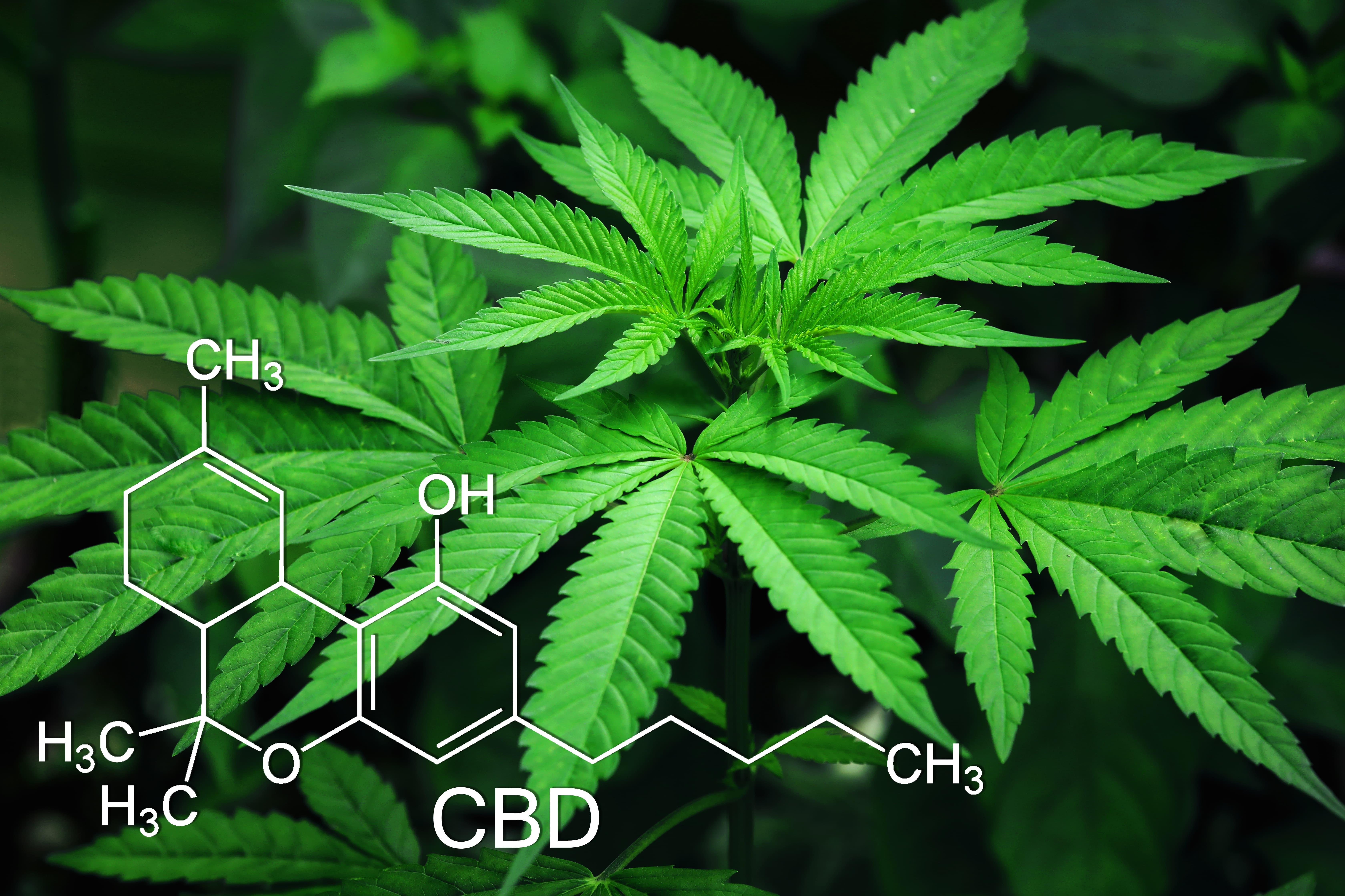 Pequeña introducción a las sustancias químicas del cannabis y beneficios terapéuticos