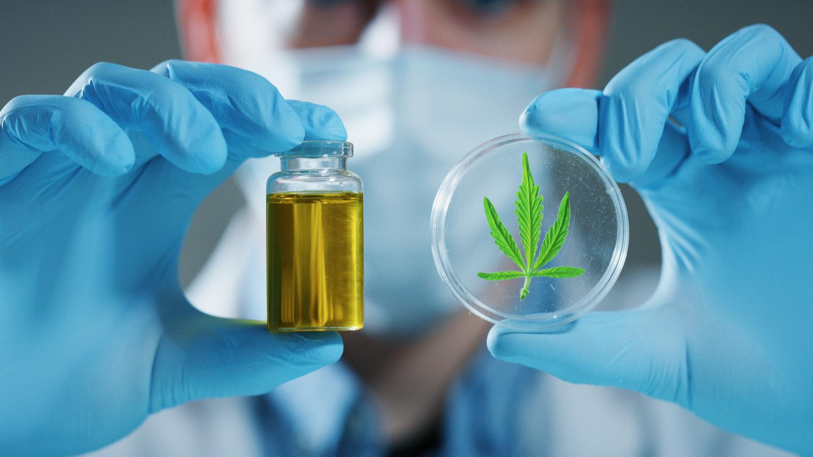 Crean test genético para medir sensibilidad al cannabis